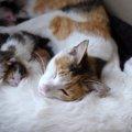 猫の乳腺炎の症状や原因、治療の方法について