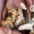 猫や犬など動物のSOSに気づいていますか?