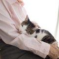 甘えてくる猫の尻が臭い!それは病気では無く・・・