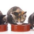 猫の餌入れの種類と特徴、その選び方のポイント