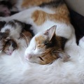 「僕の彼女助けてくれニャ」仲良し野良猫の彼女を家族としてお迎えし…