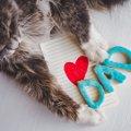 2月22日は猫の日!猫と暮らせる喜びをかみしめよう