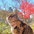 LAYLAの12猫占い【11/16~11/22】のあなたと猫ちゃんの運勢