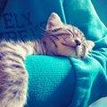 里親詐欺で子猫が行方不明に!「必ず助ける」その気持ちが起こした奇跡