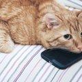 猫の携帯カバーおすすめ4選!iPhone用もAndroid用も紹介
