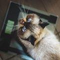 猫が急に痩せだした時に考えられること5つ