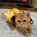 猫のテンションが上がる4つの遊び方