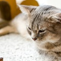 猫の病気、腎不全とは。体験談あり