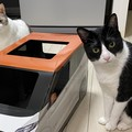 商談成立!初納車に浮かれる新人ドライバー猫と凄腕ディーラー猫が話題