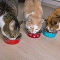 猫がごはんを食べない時はひと工夫!3つのポイント