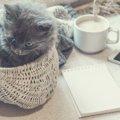 渋谷の猫カフェまとめ!デートスポットから里親になれる店舗まで