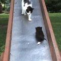 「ままー!助けて~!」無限ループの予感…滑り台を滑る子猫ちゃんを助…