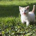 猫が息切れする原因や対処法