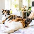 猫が自分の尻尾を追いかける7つの心理