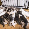 猫の中絶 費用や方法、手術可能な時期