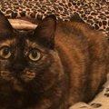 猫が『ヤキモチ』を妬きやすいシーン5選!ふてくされてしまった時のケア方…