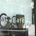 サンディエゴの保護猫カフェをご案内!