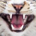 猫の歯が抜ける理由とは?生え変わり時期と病気の見分け方