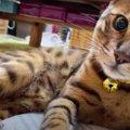 ニャーン♡甘えた鳴き声がキュートな猫さん♪