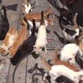 右も左も猫、猫、猫……!猫島は猫の楽園でした♪