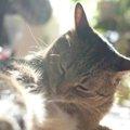 Laylaの12猫占い【1/6~1/12】のあなたと猫ちゃんの運勢