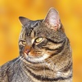 猫もボケる?痴呆になる原因と予防の方法