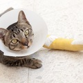 猫が足を引きずっている!原因や治療法は?