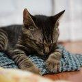 猫が脳梗塞になった時の症状と治療の方法