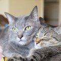 LAYLAの12猫占い【7/27〜8/2】のあなたと猫ちゃんの運勢
