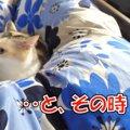 地震発生!その時、救世主の猫ちゃんが!?