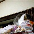 「何もしてないニャ~」イタズラがバレた猫が可愛い♡