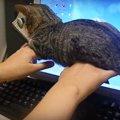 絶対に動かないニャ。かたくなにニャンサムウェアをし続ける子猫
