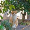 「ねこもに」とは 猫の迷子捜索のためのアイテムとサービス