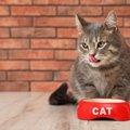 秋の猫は食欲アップ?絶対NGな『ごはんの与え方』4つ
