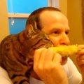仲良すぎ!飼い主と顔を並べて一緒にトウモロコシを食べる猫
