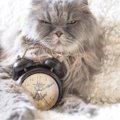 猫を短命にしてしまう『3つの飼い方』