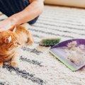 大掃除の際に気を付けるべき猫の行動4選