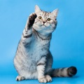 猫の足にもたくさんの機能がある!