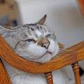 15歳の猫とは 9つの特徴