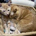 癒しでしかない♡猫が『猫団子』になる3つの理由と作り方