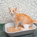 愛猫の膀胱炎、大丈夫?気になる症状や原因、予防法を解説!