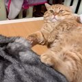 怒られちゃった…こっそり反撃する猫ちゃんが可愛い♡
