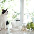 猫に紅茶を飲ませるのは危険!舐めてしまった時の対処法