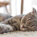 猫が熱中症になった!知っておきたい応急処置の方法4つ