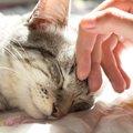 人懐っこい猫の種類と特徴
