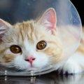 猫が避妊手術後に性格が変わる理由と注意点