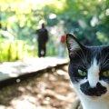 猫のクリプトコッカス症の症状と原因、その治療法