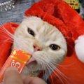猫ちゃん専用!手作りのサンタコスチューム♪
