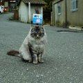 猫島が抱える問題に私たちができる協力
