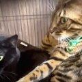 控えめ猫さんは何をしている?飼い主さんの実家で過ごす黒猫さんに密…